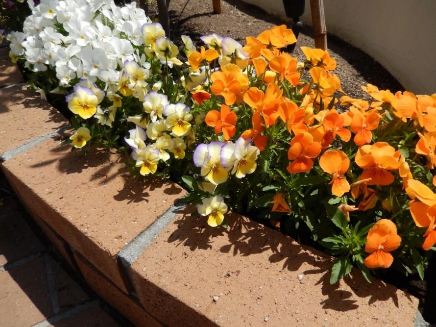 花壇スペース